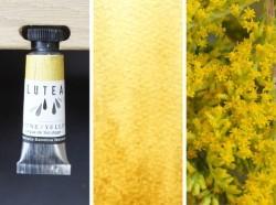 Lutea Plant-Watercolor, Golden Yellow