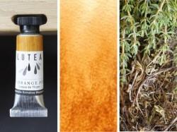 Lutea Plant-Watercolor, Light Brown