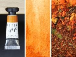 Lutea Pflanzen-Wasserfarbe Orange