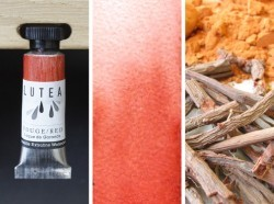 Lutea Pflanzen-Wasserfarbe Rot